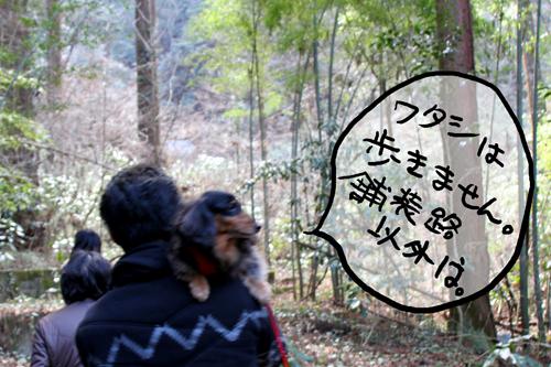 IMG_7967.jpg