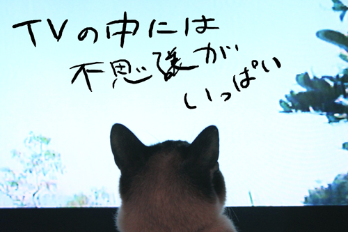 IMG_8083.jpg